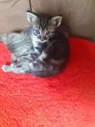 Filhotes de gatinhos fêmeas