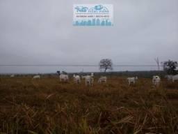 Fazenda 490 Hectares há 4.5 km da BR 070