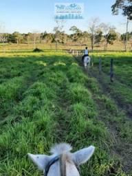 Fazenda 500 hectares Há 36 km de Poconé Mato Grosso