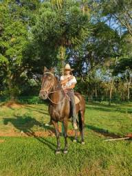 Cavalo manga larga 8.000