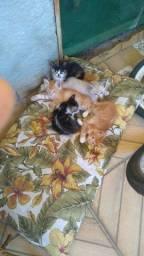 Doa-se filhotinhos de gatos