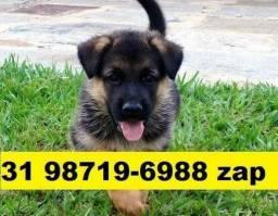 Canil Filhotes Diversos Cães BH Pastor Boxer Akita Rottweiler Labrador Dálmatas Golden