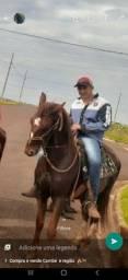 Zeus rancho 3rrr mangalarga marchado