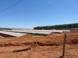 Granja de Ovos, 4 Galpões, 115 hectares de terra