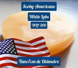 Scoby Americano - White Labs - Tam:7cm de Diâmetro