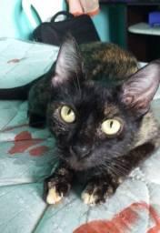 Linda gatinha castrada tricolor (carey) procura lar !