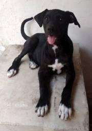 Cachorrinha porte médio para adoção