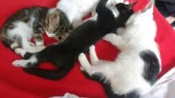 Doa gatos