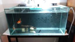 Aquario 250 litros