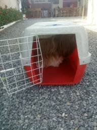 Vende caixa de transporte para cachorro de médio porte