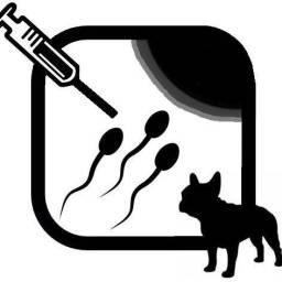 Inseminação em animais leia o anúncio