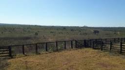 Fazenda c/ 1.000he, c/ 650 Abertos/Juquirado, Paraíso do Leste-MT