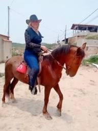 Vendo cavalo marcha batida