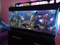 Vendo aquário 200 L