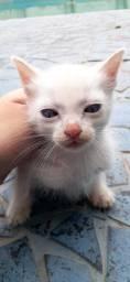 Gato branco para adoção