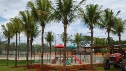 Cocô da Bahia