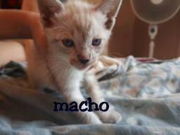Gatos para doação urgente!