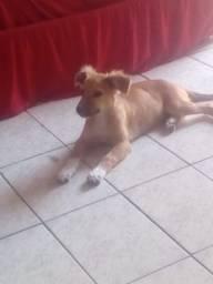 Cachorrinha pra adoção
