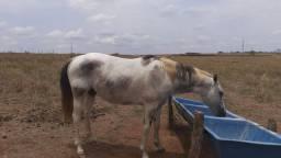 Cavalos a venda