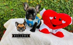Bulldog frances tigrado