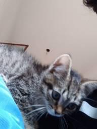 Filho de gato