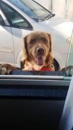 Cachorro para doação