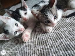 Gatos para doação responsável.