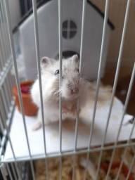Hamster anão russo, filhote