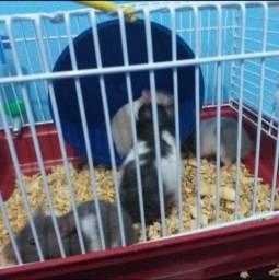 Vendo 2 hamster