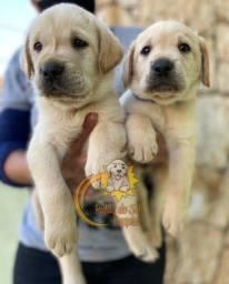 Labrador promoção de dia das mães