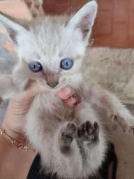 Lindos gatinhos para adoção.