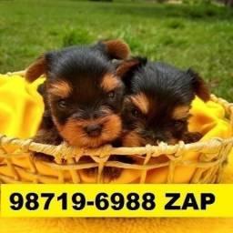 Canil Filhotes Cães Selecionados BH Yorkshire Poodle Shihtzu Beagle Maltês Lhasa Bulldog