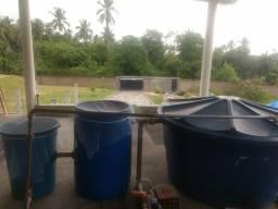 Sistema completo de criação de peixes em caixa d'água