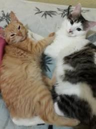 Doação de gatos urgente