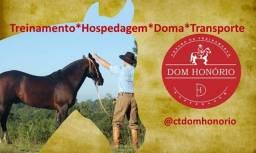 Cavalo Crioulo- Hospedagem e Treinamento