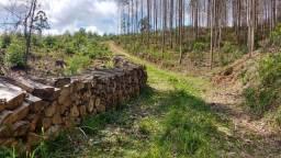 Chácara para plantio em Bocaiúva do Sul, 5 Alqueires