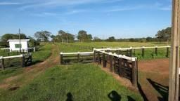 Fazenda com 981he c/ 750he abertos, 50km de Cuiabá