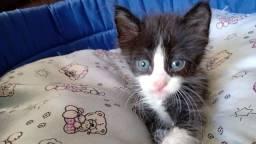 Adoção responsável filhote gato