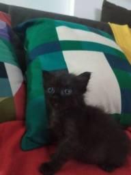 Linda gatinha para adoção.