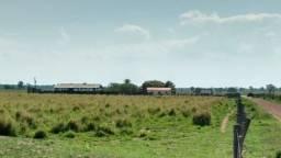Título do anúncio: Fazenda c/ 1.000he, 620he formados, Itiquira MT