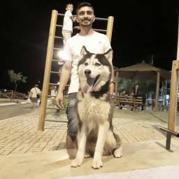Husky siberiano para cobertura
