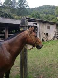 Égua parida