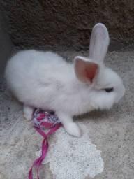 Mini coelha