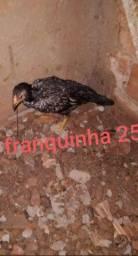 Franquinhas  25