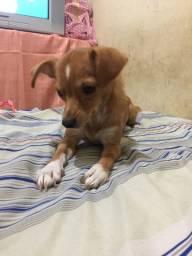 Doação de cadelinha urgente !!!!