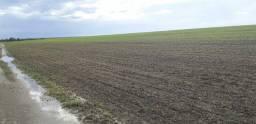 Fazendas pra soja ou gado