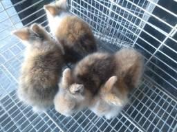 Lindos coelhos para estimação !