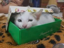 Doação de gatos fofos