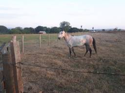 Égua pantaneira