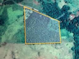 Área de 2 alqueires contendo 9 mil pés de eucalipto